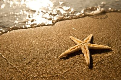 sparkle starfish